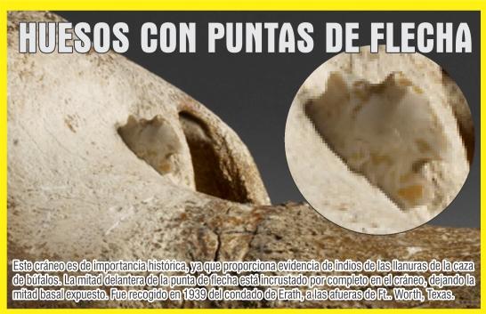 CRANEO DE BUFALO CON PUNTA DE FLECHA 2